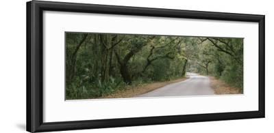 Trees Both Sides of a Road, Fort Clinch State Park, Amelia Island, Florida, USA--Framed Photographic Print