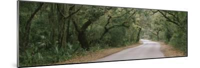 Trees Both Sides of a Road, Fort Clinch State Park, Amelia Island, Florida, USA--Mounted Photographic Print
