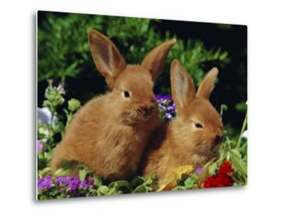 New Zealand Domestic Rabbits and Flowers-Lynn M^ Stone-Metal Print