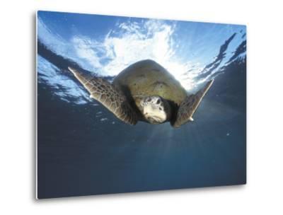 Green Turtle Swimming, Sulu-Sulawesi Seas, Indo Pacific Ocean-Jurgen Freund-Metal Print