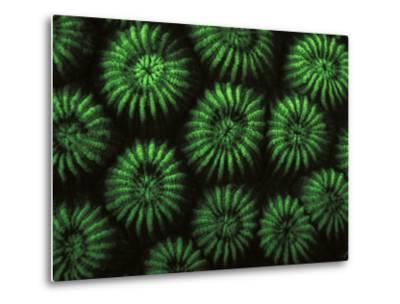 Hard Corals, Fluorescent Under Uv Light, Papua New Guinea-Jurgen Freund-Metal Print