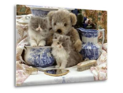 9-Week, Blue Bicolour Persian Kitten, Brindle Teddy Bear and Victorian Staffordshire Wash-Stand Set-Jane Burton-Metal Print