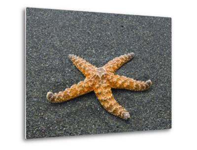 Ochre Seastar, Exposed on Beach at Low Tide, Olympic National Park, Washington, USA-Georgette Douwma-Metal Print