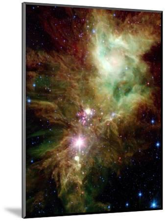 Christmas Tree Cluster-Stocktrek Images-Mounted Photographic Print