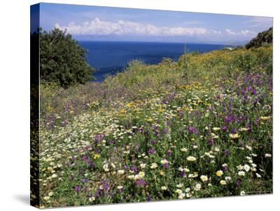 April Spring Flowers, Zingaro Nature Reserve, Northwest Area, Island of Sicily, Italy-Richard Ashworth-Stretched Canvas Print