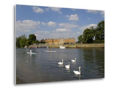 Swans and Sculls on the River Thames, Hampton Court, Greater London, England, United Kingdom-Charles Bowman-Metal Print