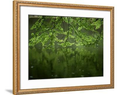 Beech Leaves Over Lake, Waggoners Wells, Grayshot, Surrey, England, United Kingdom-Pearl Bucknall-Framed Photographic Print