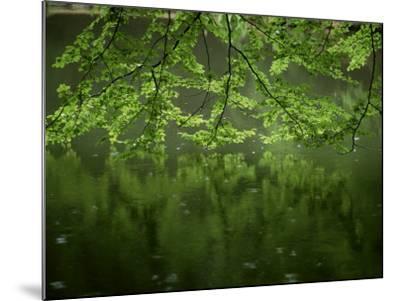 Beech Leaves Over Lake, Waggoners Wells, Grayshot, Surrey, England, United Kingdom-Pearl Bucknall-Mounted Photographic Print