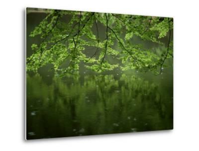 Beech Leaves Over Lake, Waggoners Wells, Grayshot, Surrey, England, United Kingdom-Pearl Bucknall-Metal Print