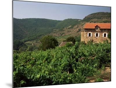 Farmhouse Near Millau, Aveyron, Midi Pyrenees, France-Michael Busselle-Mounted Photographic Print