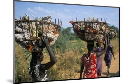 Nuer Women Carrying Sorghum, Gambella Region, Ilubador State, Ethiopia, Africa-Bruno Barbier-Mounted Photographic Print