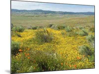 Antelope Valley Poppy Reserve, California, USA-Ethel Davies-Mounted Photographic Print