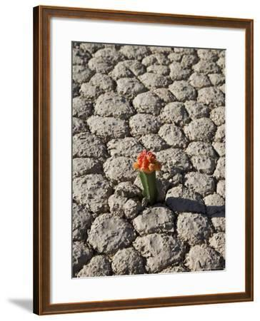 The Racetrack Point, Death Valley National Park, California, USA-Angelo Cavalli-Framed Photographic Print