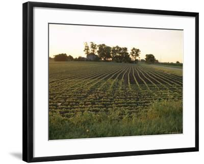 Soy Bean Field, Hudson, Illinois, Midwest, USA-Ken Gillham-Framed Photographic Print
