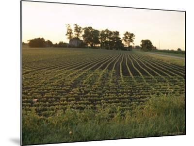 Soy Bean Field, Hudson, Illinois, Midwest, USA-Ken Gillham-Mounted Photographic Print