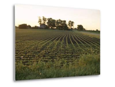Soy Bean Field, Hudson, Illinois, Midwest, USA-Ken Gillham-Metal Print