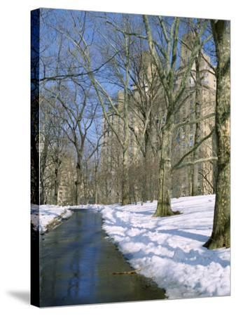 Bare Trees and Snow in Winter in Central Park, Manhattan, New York City, USA-David Lomax-Stretched Canvas Print