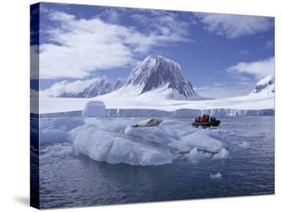 Tourists in Rigid Inflatable Boat Approach a Seal Lying on the Ice, Antarctica-Geoff Renner-Stretched Canvas Print