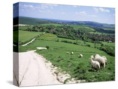 Sheep on the South Downs Near Lewes, East Sussex, England, United Kingdom-Jenny Pate-Stretched Canvas Print