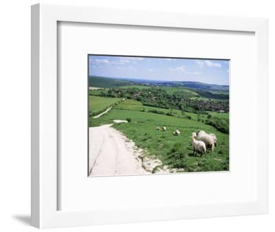 Sheep on the South Downs Near Lewes, East Sussex, England, United Kingdom-Jenny Pate-Framed Photographic Print