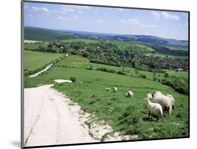 Sheep on the South Downs Near Lewes, East Sussex, England, United Kingdom-Jenny Pate-Mounted Photographic Print