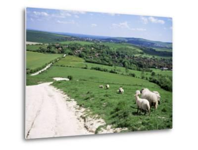 Sheep on the South Downs Near Lewes, East Sussex, England, United Kingdom-Jenny Pate-Metal Print