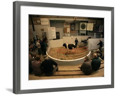 Skibbereen Cattle Auctions, County Cork, Munster, Eire (Republic of Ireland)-Gavin Hellier-Framed Photographic Print