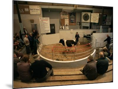 Skibbereen Cattle Auctions, County Cork, Munster, Eire (Republic of Ireland)-Gavin Hellier-Mounted Photographic Print