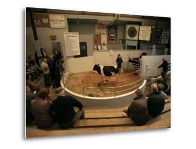 Skibbereen Cattle Auctions, County Cork, Munster, Eire (Republic of Ireland)-Gavin Hellier-Metal Print