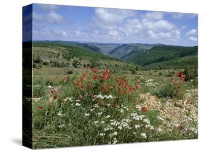 Causse Mejean, Gorges Du Tarn Behind, Lozere, Languedoc-Roussillon, France-David Hughes-Stretched Canvas Print