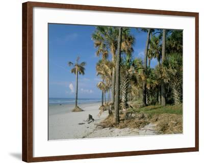 Sub-Tropical Forest and Coastline, Hunting Island State Park, South Carolina, USA-Duncan Maxwell-Framed Photographic Print