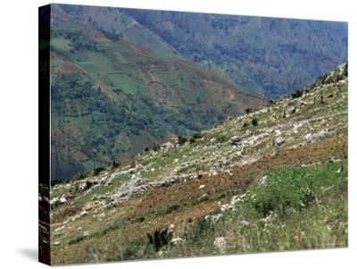 People Working in Steep Mountain Fields, at 2000M, Haiti, West Indies, Central America-Lousie Murray-Stretched Canvas Print