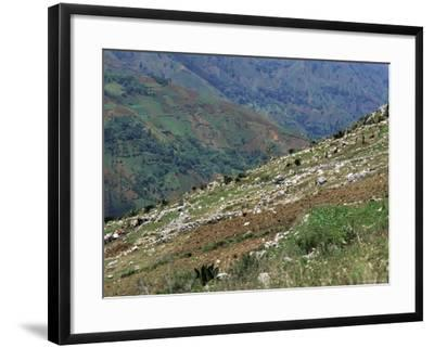 People Working in Steep Mountain Fields, at 2000M, Haiti, West Indies, Central America-Lousie Murray-Framed Photographic Print