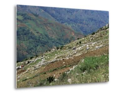 People Working in Steep Mountain Fields, at 2000M, Haiti, West Indies, Central America-Lousie Murray-Metal Print