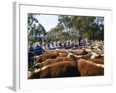 Cattle Sale in Victorian Alps, Victoria, Australia-Claire Leimbach-Framed Photographic Print