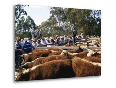 Cattle Sale in Victorian Alps, Victoria, Australia-Claire Leimbach-Metal Print