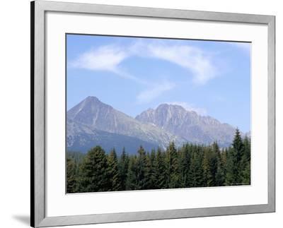 Mountain Pines, Vysoke Tatry Mountains, Vysoke Tatry, Slovakia-Richard Nebesky-Framed Photographic Print
