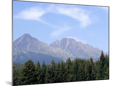 Mountain Pines, Vysoke Tatry Mountains, Vysoke Tatry, Slovakia-Richard Nebesky-Mounted Photographic Print