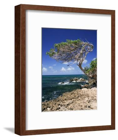 Divi Divi Tree, Cudarebe Point, Aruba, West Indies, Dutch Caribbean, Central America-Sergio Pitamitz-Framed Photographic Print