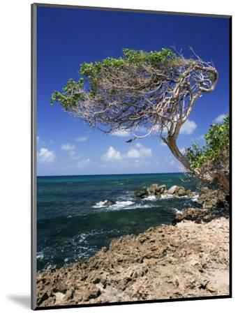 Divi Divi Tree, Cudarebe Point, Aruba, West Indies, Dutch Caribbean, Central America-Sergio Pitamitz-Mounted Photographic Print