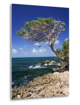 Divi Divi Tree, Cudarebe Point, Aruba, West Indies, Dutch Caribbean, Central America-Sergio Pitamitz-Metal Print