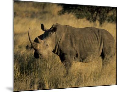 White Rhinoceros, Ceratotherium Simum, Namibia, Africa-Thorsten Milse-Mounted Photographic Print