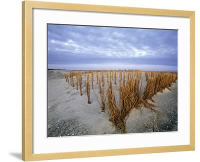 Beach in the Early Morning, Darss, Mecklenburg-Vorpommern, Germany-Thorsten Milse-Framed Photographic Print