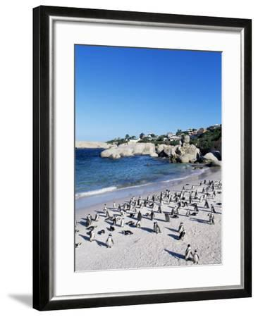 African Penguins at Boulder Beach in Simon's Town, Near Cape Town, South Africa, Africa-Yadid Levy-Framed Photographic Print