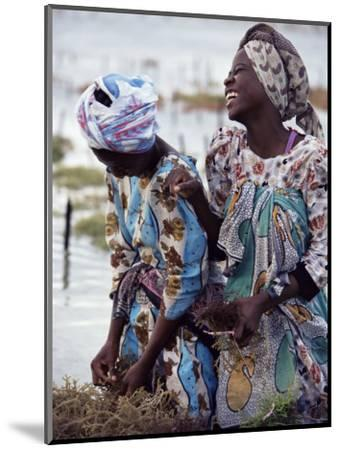 Two Smiling Zanzibari Women Working in Seaweed Cultivation, Zanzibar, Tanzania, East Africa, Africa-Yadid Levy-Mounted Photographic Print