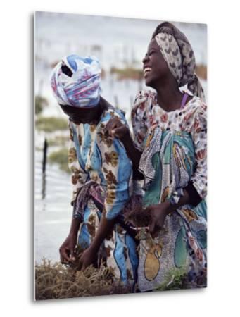 Two Smiling Zanzibari Women Working in Seaweed Cultivation, Zanzibar, Tanzania, East Africa, Africa-Yadid Levy-Metal Print