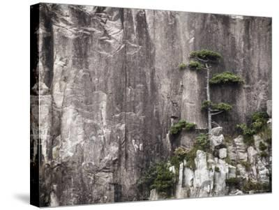 Pine Tree, White Cloud Scenic Area, Mount Huangshan (Yellow Mountain), Anhui Province-Jochen Schlenker-Stretched Canvas Print