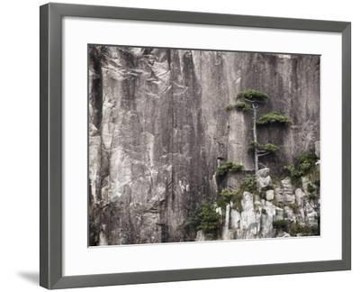 Pine Tree, White Cloud Scenic Area, Mount Huangshan (Yellow Mountain), Anhui Province-Jochen Schlenker-Framed Photographic Print