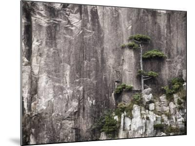 Pine Tree, White Cloud Scenic Area, Mount Huangshan (Yellow Mountain), Anhui Province-Jochen Schlenker-Mounted Photographic Print