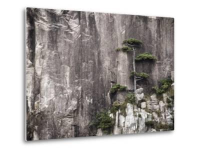 Pine Tree, White Cloud Scenic Area, Mount Huangshan (Yellow Mountain), Anhui Province-Jochen Schlenker-Metal Print